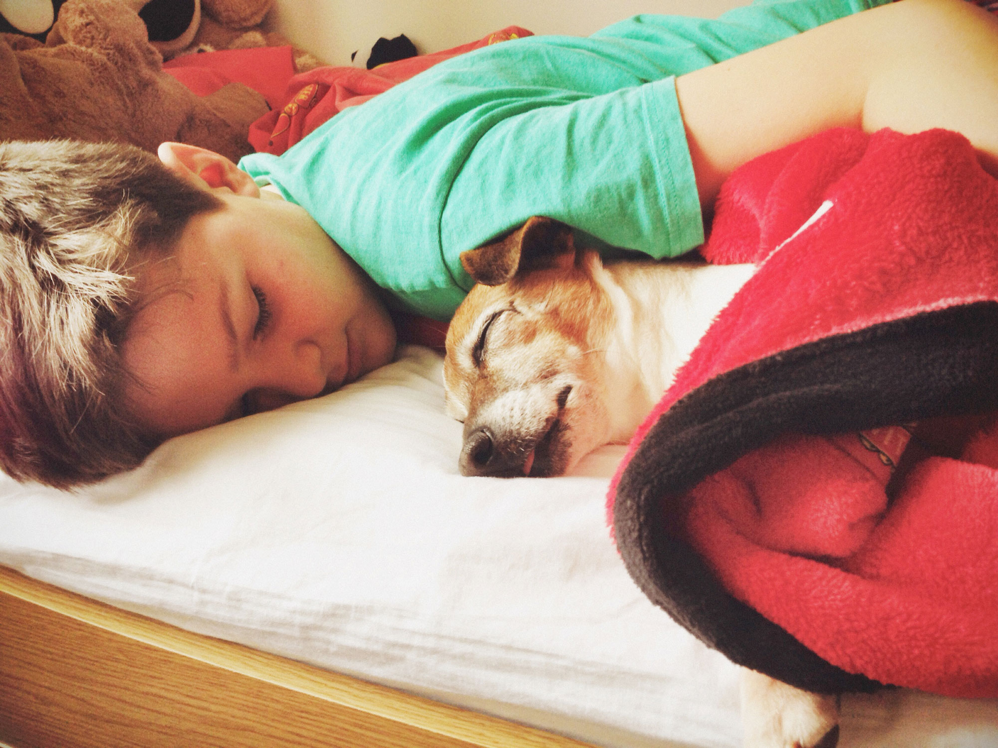 Young boy resting in his bed with a sleeping dog.